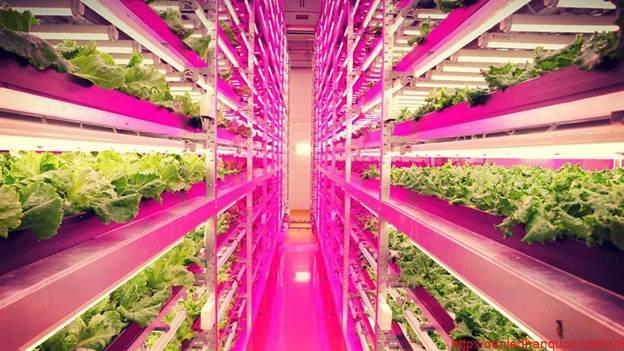 ứng dụng của đèn led trong nông nghiệp